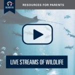 Wildlife Live Streams for Kids (and Adults)