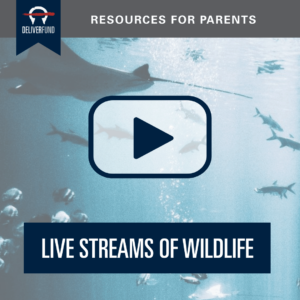 resources-for-parents-livestream